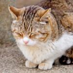 cat48 00 - 管理人