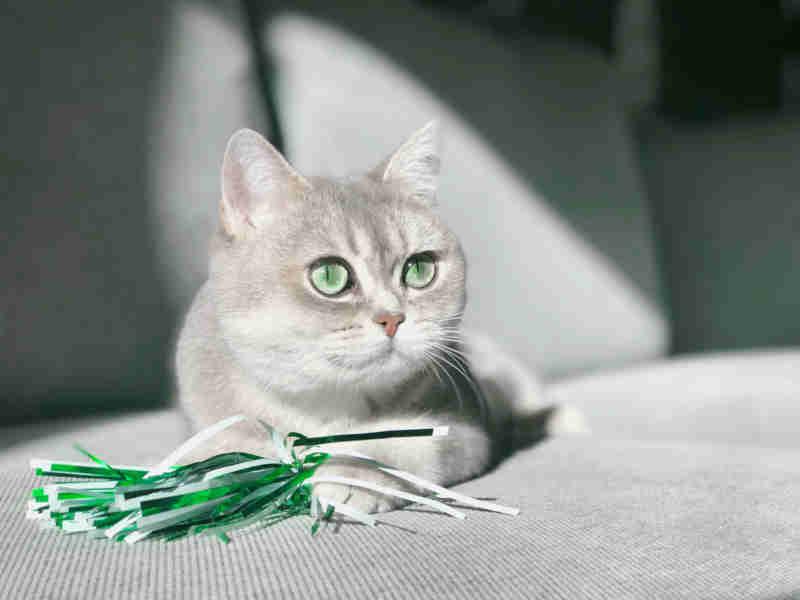 cat29 01 - [Android] 外部ストレージに画像を保存・読出しをする