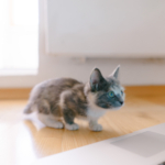 cat32 00 - 管理人