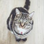 cat17 00 - 管理人