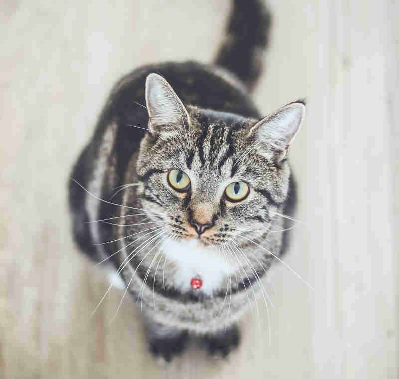 cat17 01 - [Android] カウントアップするタイマー、ストップウォッチをTimerTaskで作る