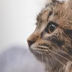 cat19 00 - 管理人