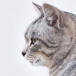 cat20 00 - 管理人
