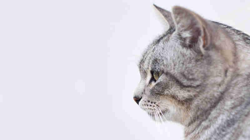 cat20 01 - [Android] Google Map ズームとアイコン画像貼り付け