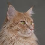 cat21 00 - 管理人