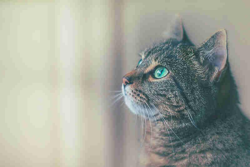 cat23 01 - AndroidXに移行する