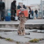 cat25 00 - 管理人
