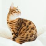 cat26 00 - 管理人