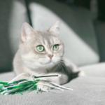 cat29 00 - 管理人