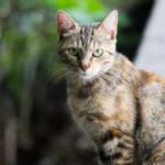 cat31 00 - 管理人