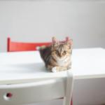 cat36 00 - 管理人