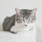 cat37 00 - 管理人