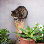 cat38 00 - 管理人