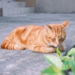 cat41 00 - 管理人