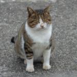 cat46 00 - 管理人