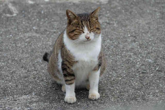 cat46 01 - [Android] EditText をコードで記述する