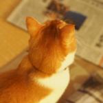 cat47 00 - 管理人
