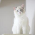cat49 00 - 管理人