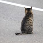 cat50 00 - 管理人
