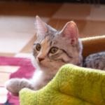cat51 00 - 管理人