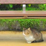 cat53 00 - 管理人