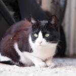 cat55 00 - 管理人