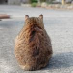 cat56 00 - 管理人