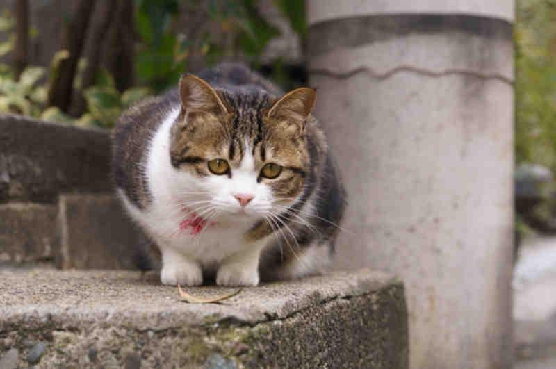 cat59 01 - [Android] バックグラウンドでGPSログを取り続けるには