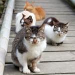 cat61 00 - 管理人