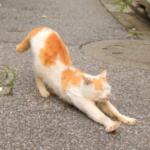 cat64 00 - 管理人