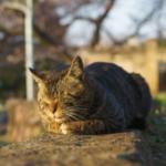 cat65 00 - 管理人
