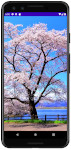 as413 m39 00 - [Android] ImageView ScaleType 画像をScreenにフィットさせる
